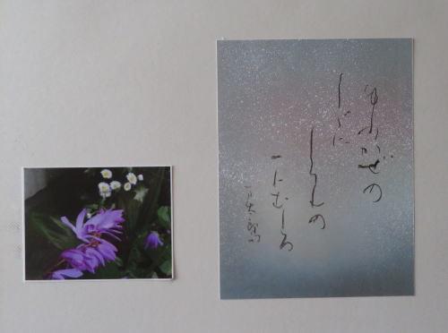 IMG_8159-500.jpg