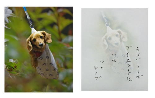 momoのコピー.jpg